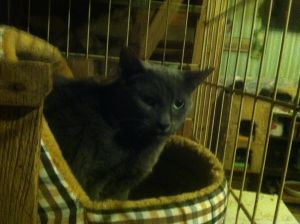 Max is a semi-feral cat He gets along with other cats Microchipped and neutered contact Heart and