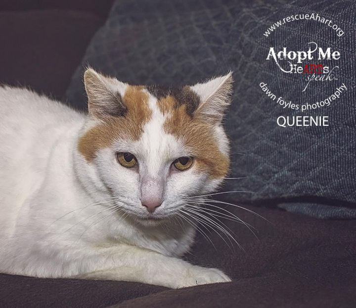 Queenie-Waived Fee 2