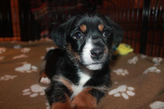 Martika ~ Adopted!