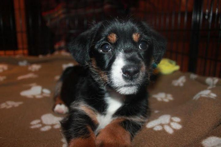 Martika ~ Adopted! 1