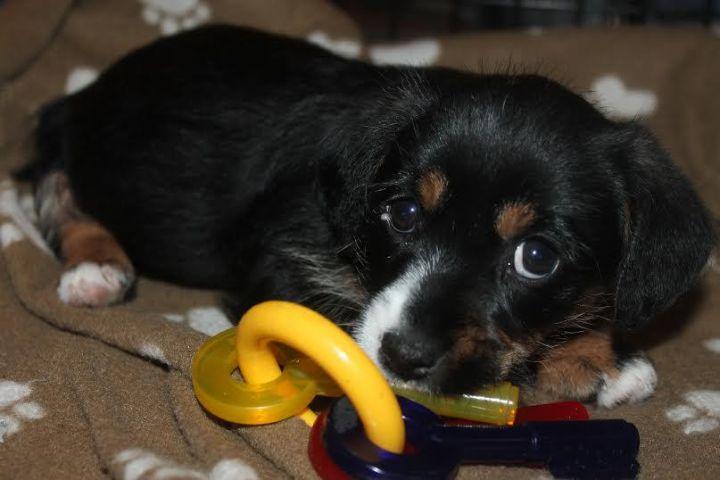 Martika ~ Adopted! 2
