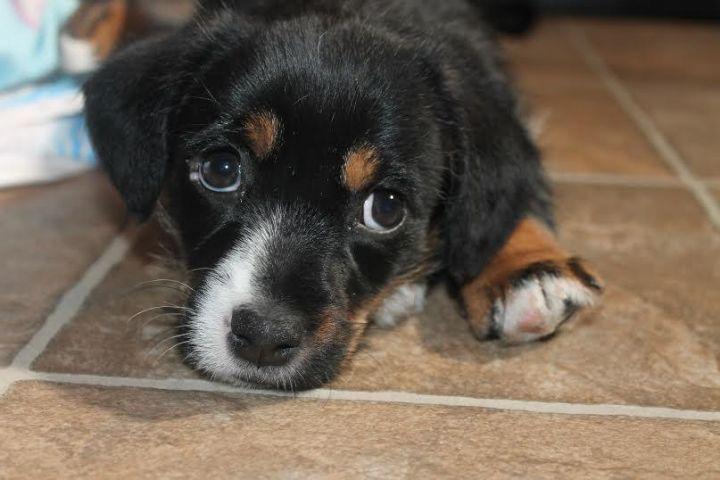 Martika ~ Adopted! 3