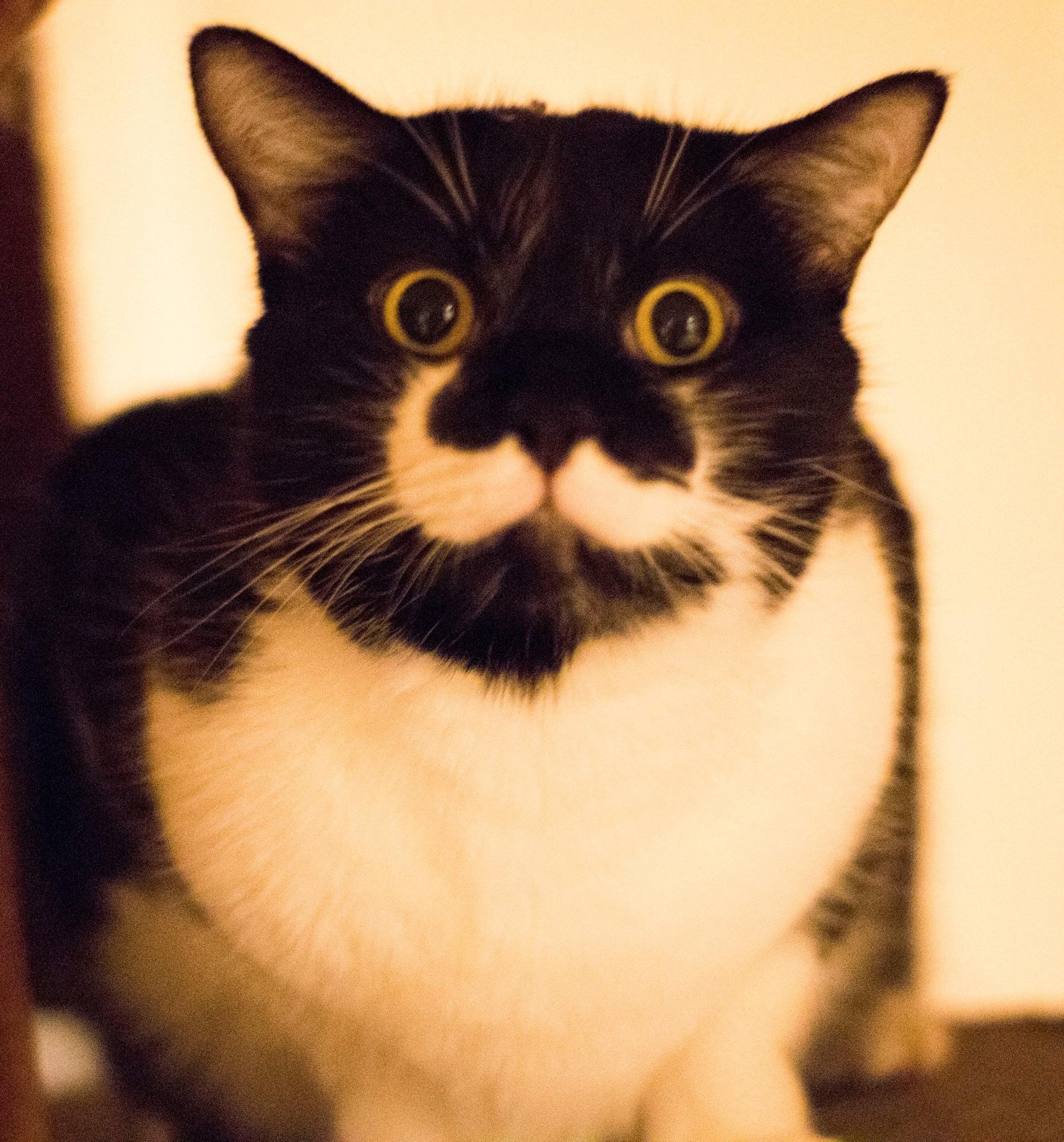 Cat for Adoption – Finn, near Birmingham, AL | Petfinder
