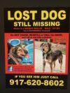Irish Terrier Dog: LOST Macho Mini