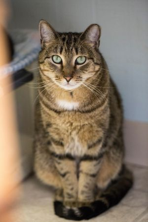 This is Tanner He has been living at the shelter for several years always overlooked as he always