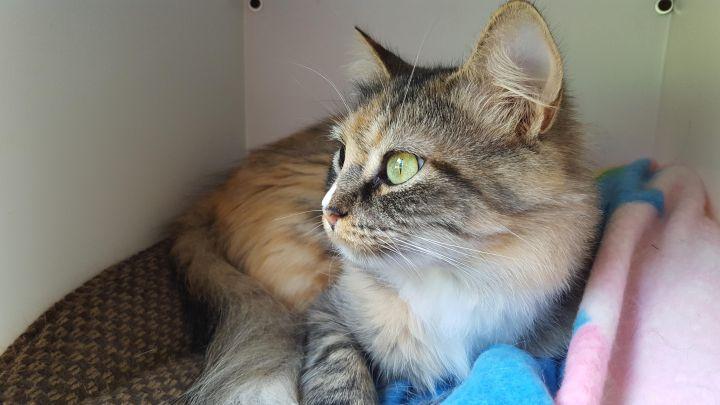Sun City Sista Kitty 2