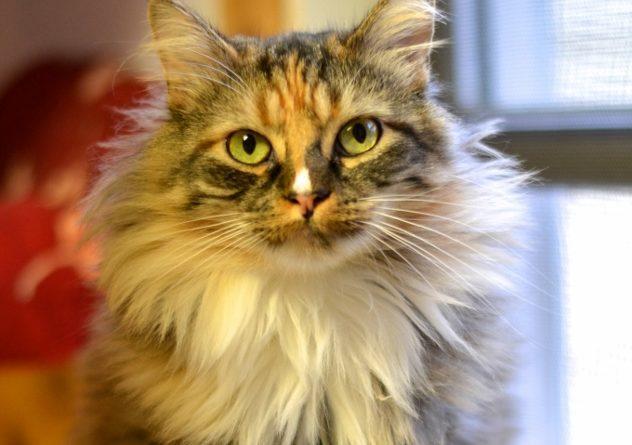 Sun City Sista Kitty 1