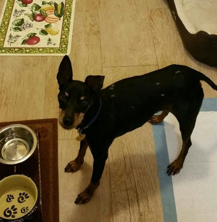 Lenny in Los Angeles area 1