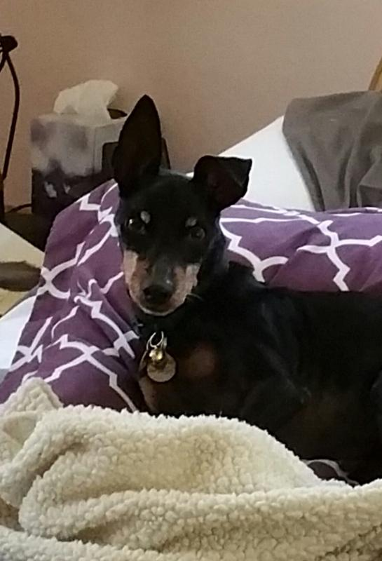 Lenny in Los Angeles area 2