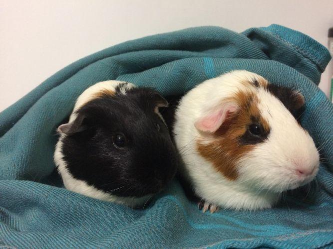 Bella and Lilia