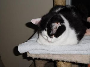 Marta - senior cat, needs TLC