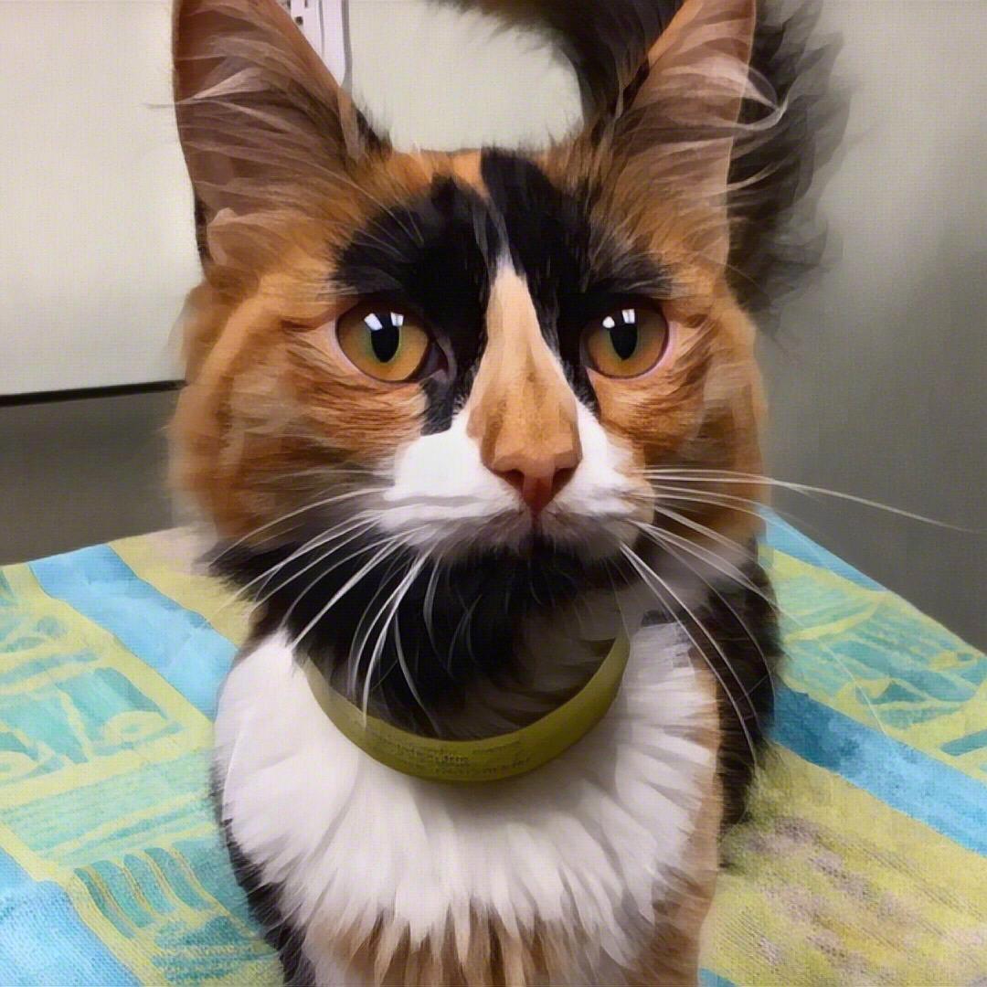 Cat for Adoption – Annie Jones POLYDACTYL near Newtown CT