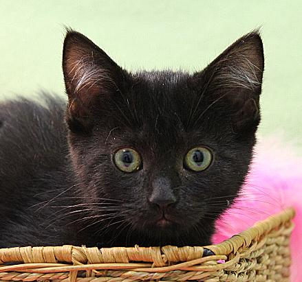 Fudge, an adoptable Domestic Medium Hair Mix in Waverly, IA_image-2