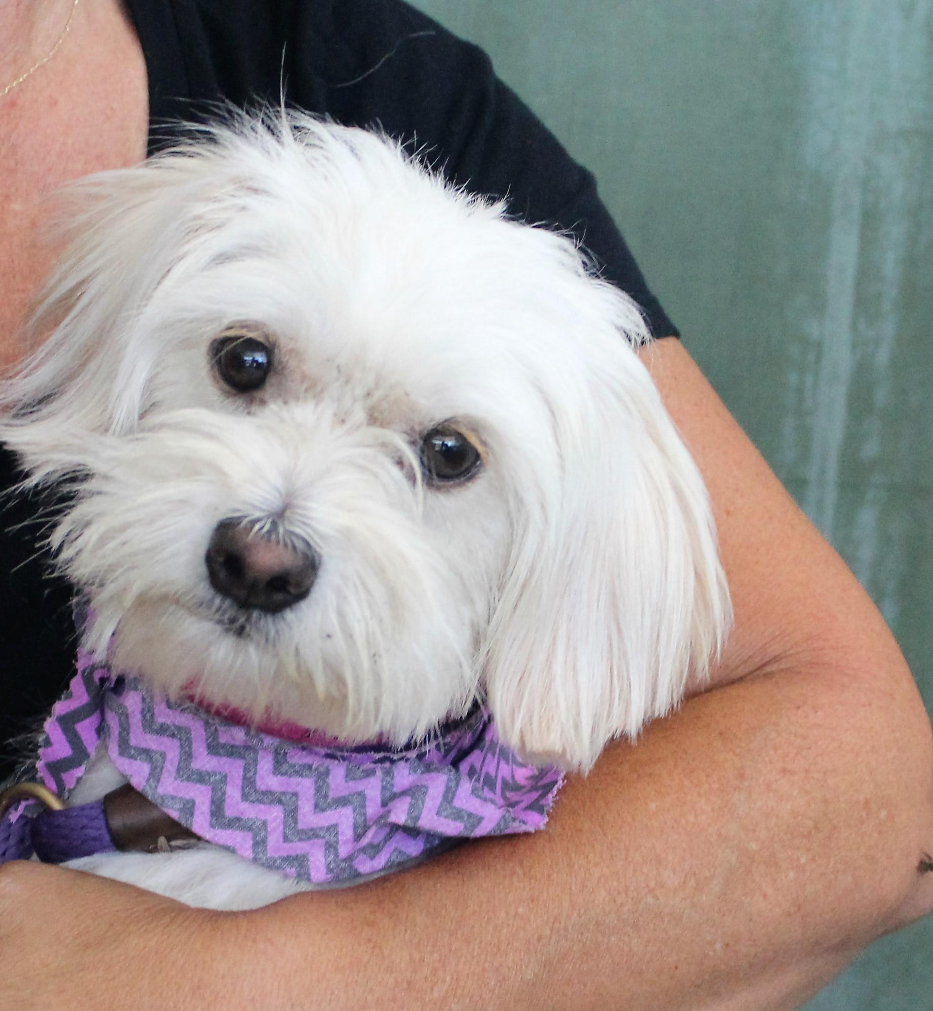 COOKIE (AT EAST VALLEY SHELTER) A1646146