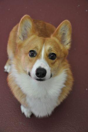 Charlie (adoption pending)