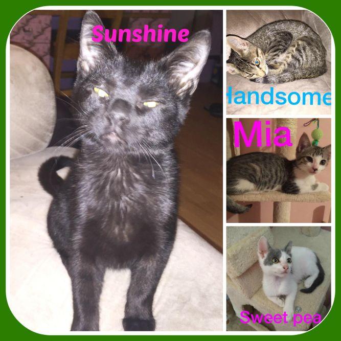 KITTENS & CATS - SEE 11ADD. CAT PICS