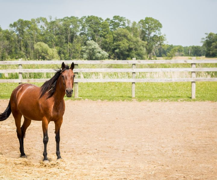Holly, an adoptable Quarterhorse in Elkhart Lake, WI