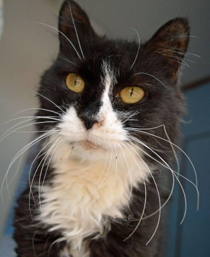 Surf, an adopted Domestic Medium Hair in Middletown, NY