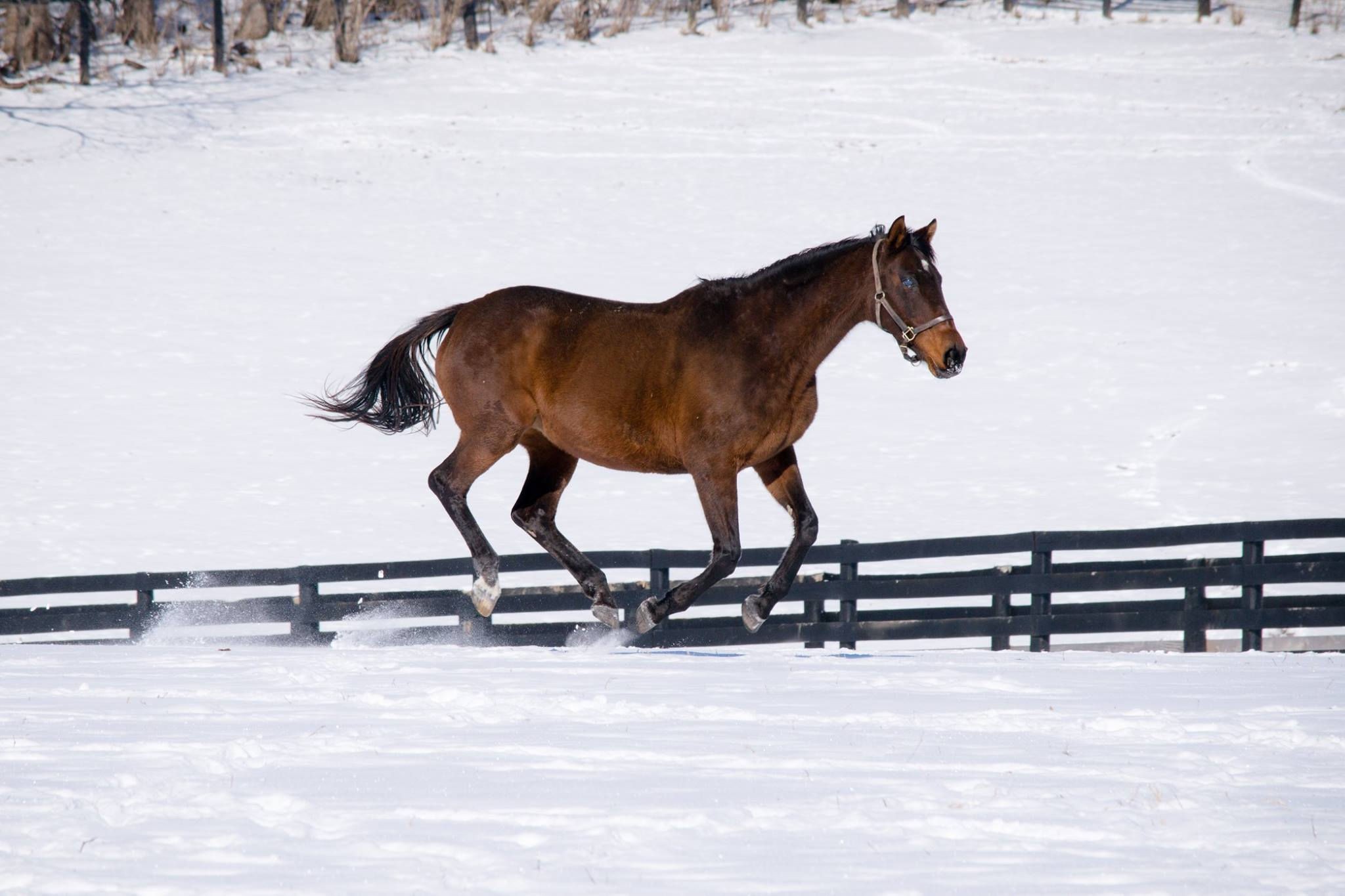 Feeding to Protect Your Equine Companion