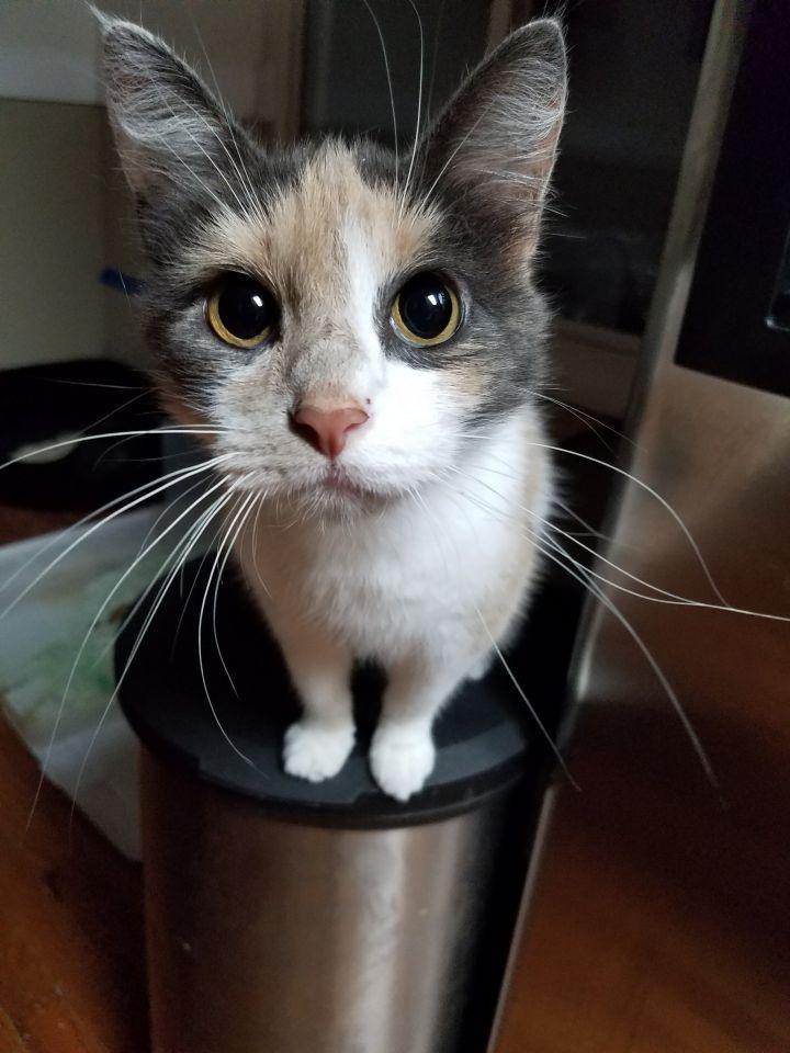 Fiona 2