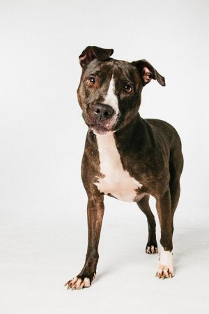 Maya loves people She also needs an experienced handler and must be an only animal Maya got hersel