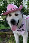 Great Pyrenees Dog: Pyper