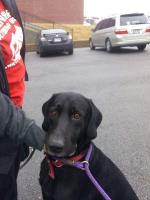 Buddy is about 2-4 years old He loves children Buddy does not like small dogs or cats