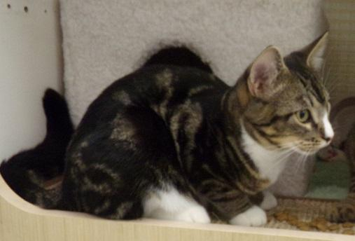 Figaro ADOPTED 1