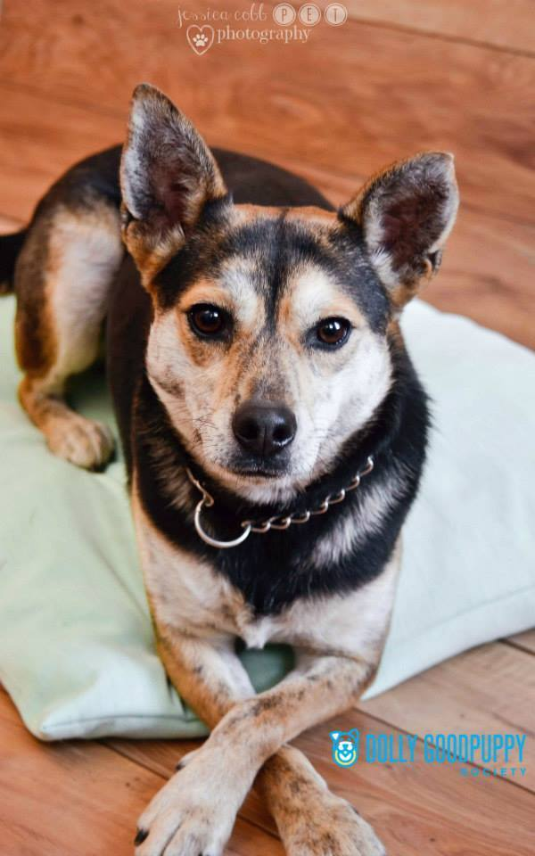 Pixie, an adoptable Terrier Mix in Barnesville, GA