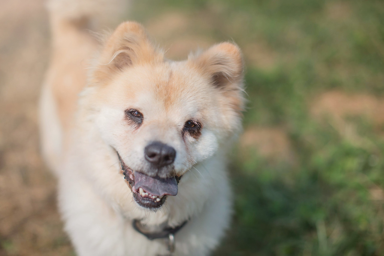 Dog for Adoption – Jimmy near Arlington VA