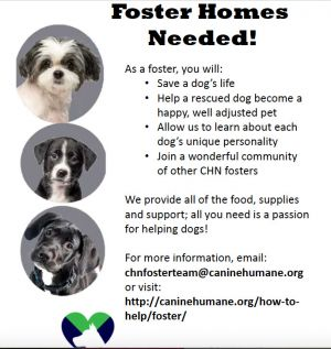 WANTED: FOSTER MOMS & DADS