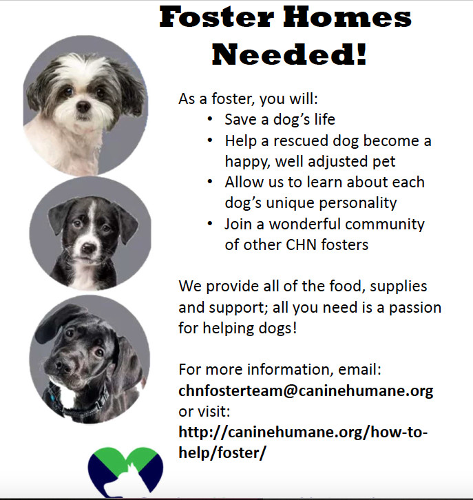 WANTED: FOSTER MOMS & DADS, an adoptable Mixed Breed in Highland, MD