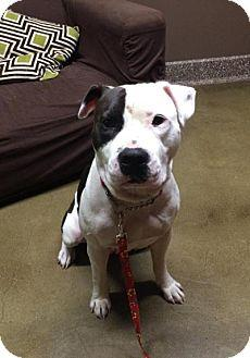 Riley was found as a stray and taken into our rescue - she is a young playful energetic girl that