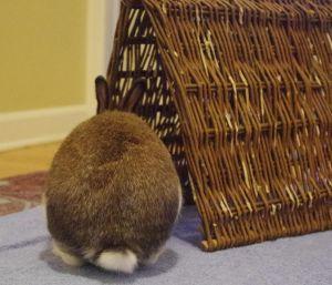 Ernie Bunny Rabbit Rabbit