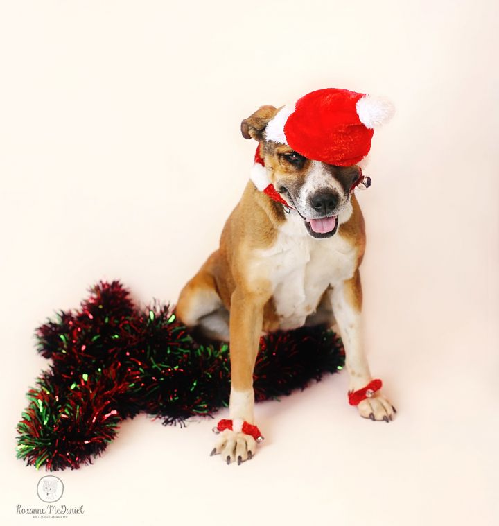 Dog for adoption - Journey, a Mixed Breed in Lubbock, TX