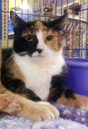 Name Molly Approx Age 5 years Hi Im Molly Im a lovely girl looking for a human to hang out