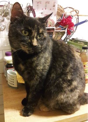 Delilah is a five-year old spayed female Tortie that was rescued roaming the Bronx We feel she was