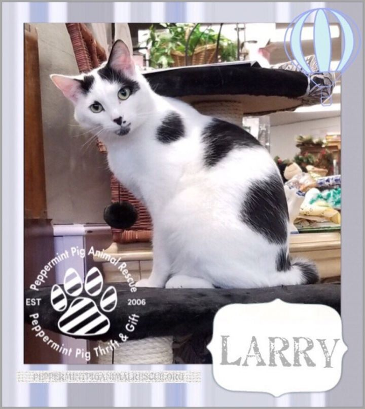 Larry, an adopted Domestic Short Hair in Cincinnati, OH