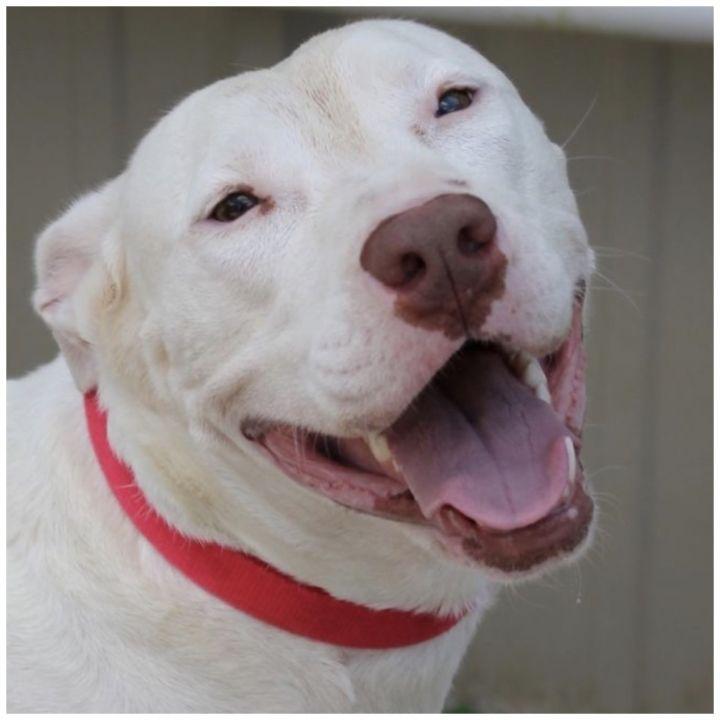 Candie 6