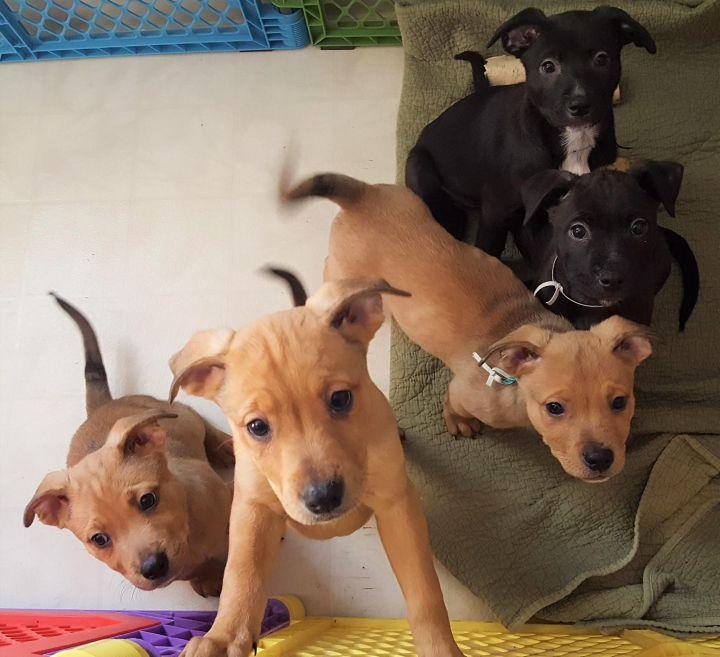 Puppies 2