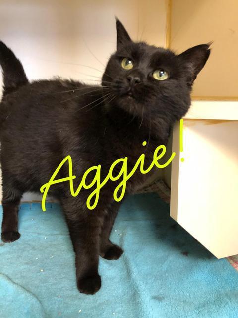 Aggie - adoption fee waived!
