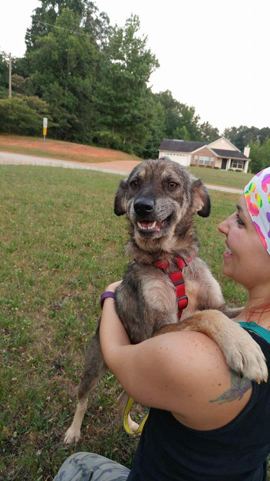 Teddy, an adoptable Shepherd Mix in Barnesville, GA
