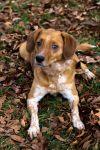 Hunting Dog Training Columbia Mo