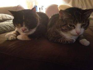 Izzy and Tipsy