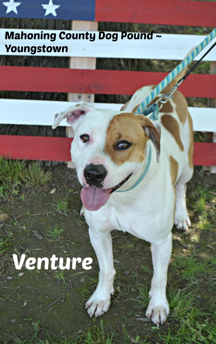 Venture, an adopted Terrier Mix in Youngstown, OH