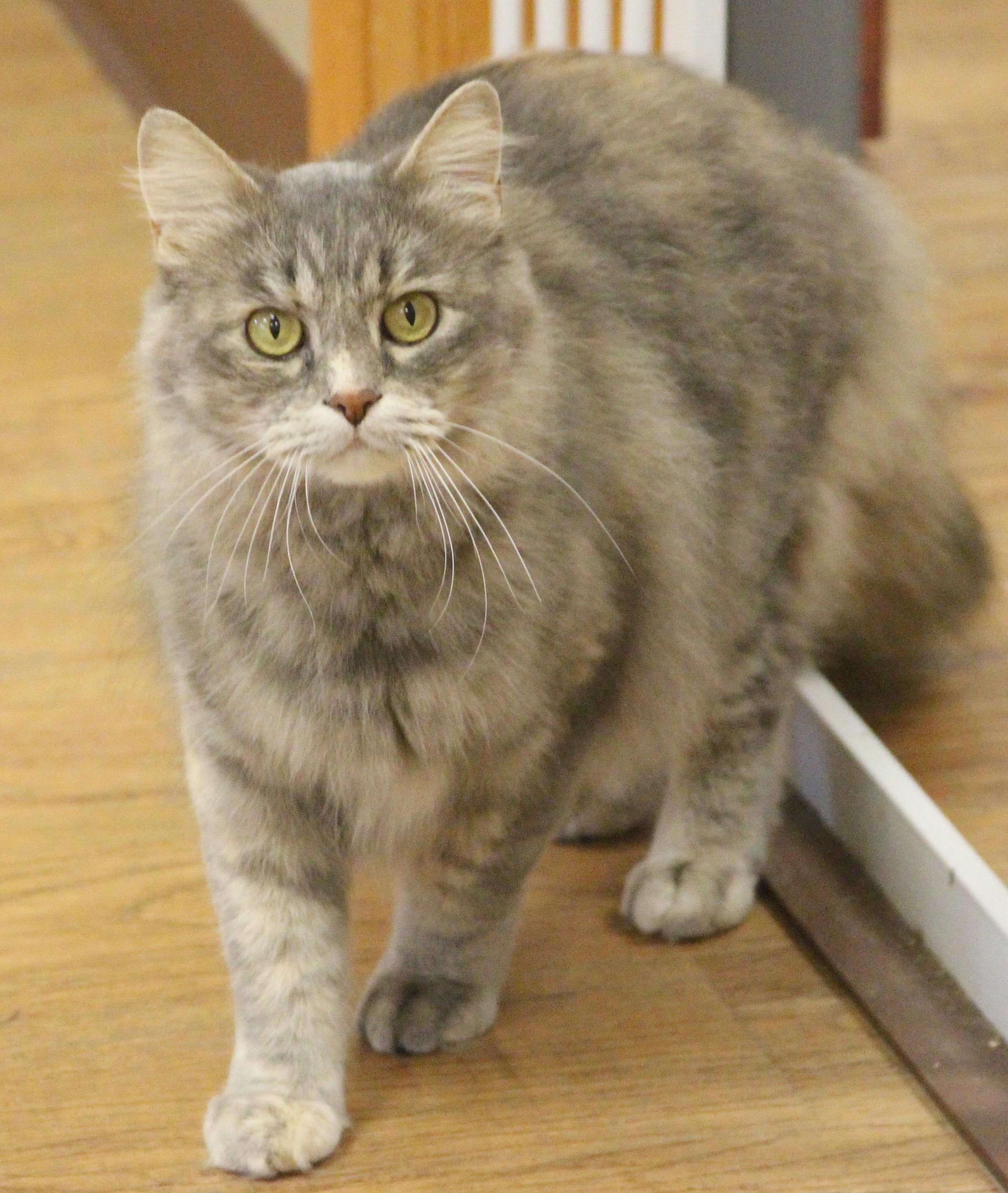 Cat For Adoption Yuna Near Dodgeville Wi Petfinder