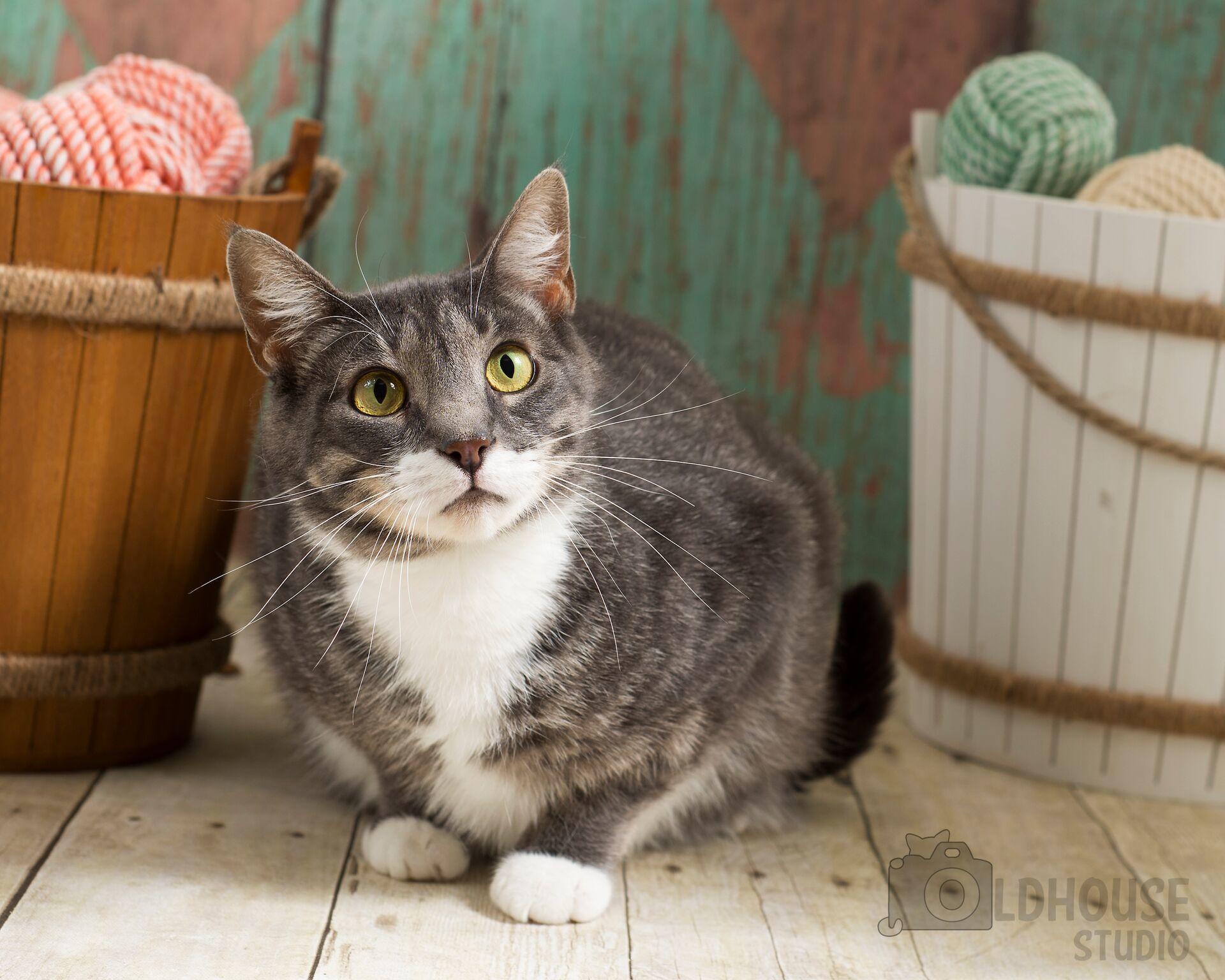 Iris - 2 yrs old - Colony Cat!