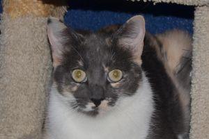 Mary Jane Calico Cat