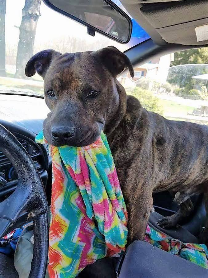Dogs For Adoption Near Pittsburgh Pa Petfinder