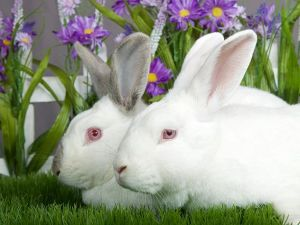 . Lilac & jasmine .